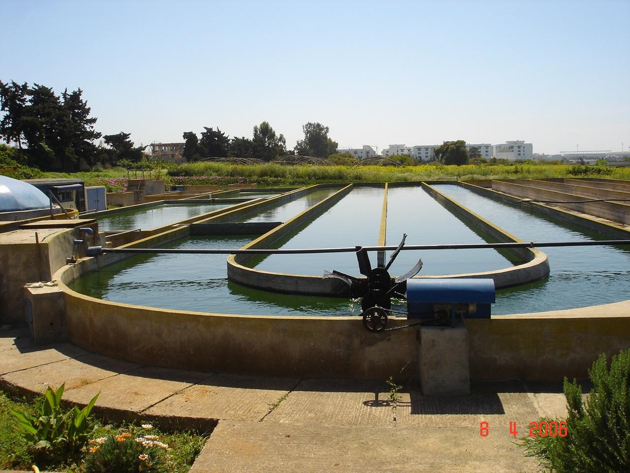 Open Pond System.jpg